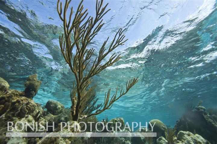 Grand_Cayman_Snorkeling (2)