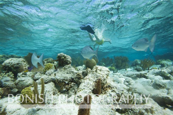 Grand_Cayman_Snorkeling (3)