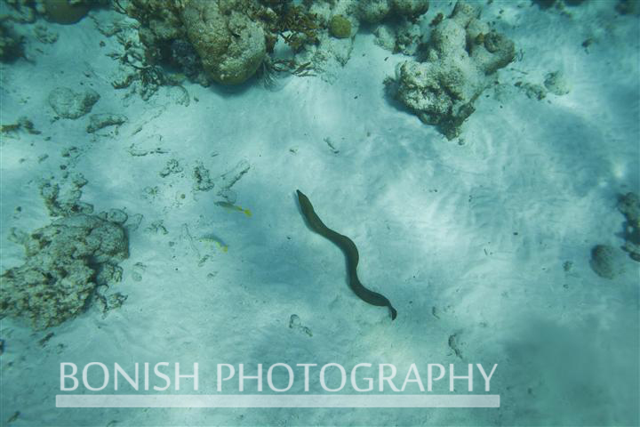 Grand_Cayman_Snorkeling (5)