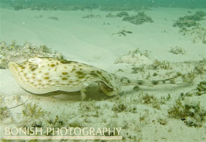 Snorkeling_Cozumel (2)