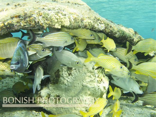 Snorkeling_Cozumel (3)