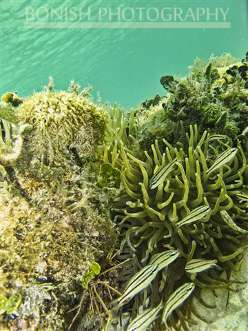 Snorkeling_Cozumel (6)
