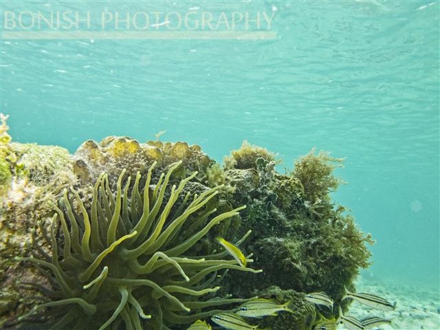Snorkeling_Cozumel (7)