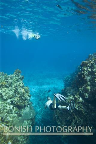 Snorkeling_Roatan (11)