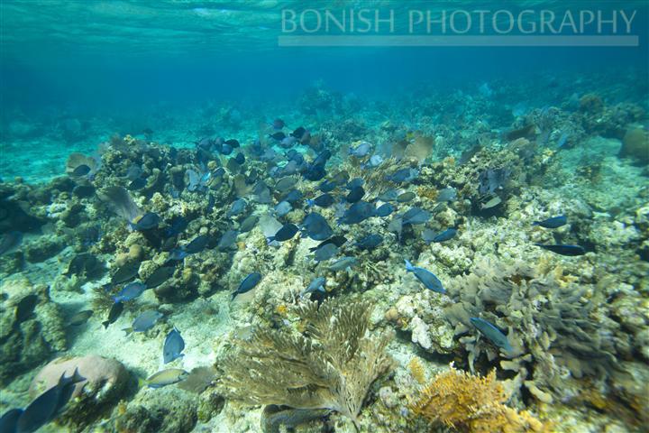 Snorkeling_Roatan (3)