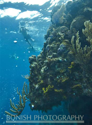 Snorkeling_Roatan (9)