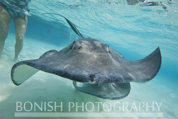 Stingray_City (12)