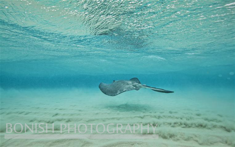 Stingray_City (5)