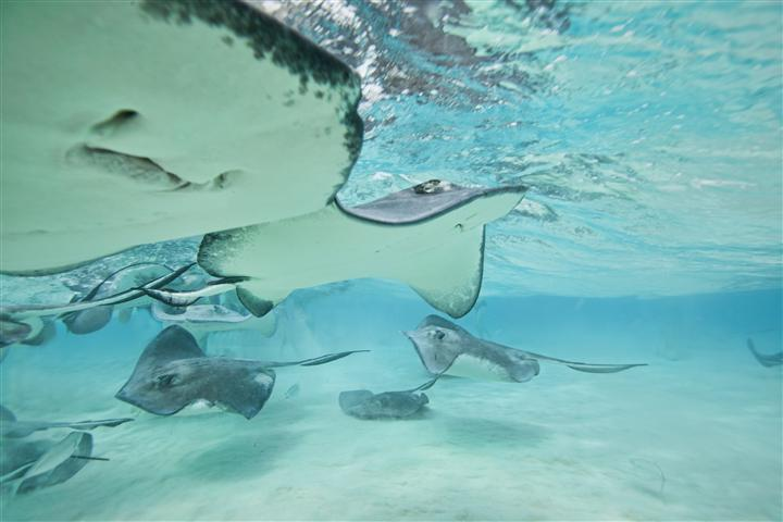 Stingray_City (6)