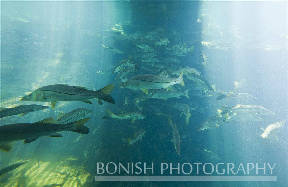 Under_Water_School_Fish
