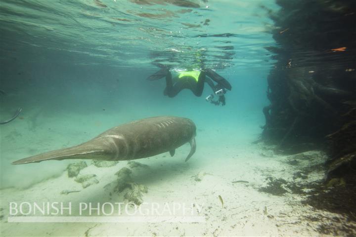Underwater_Photographer
