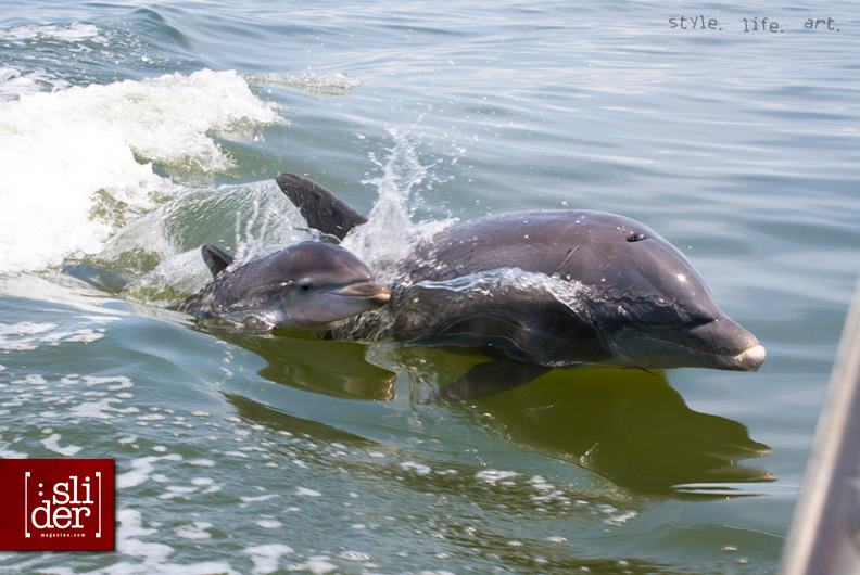 Baby_Dolphin_Photo_By_Jay_Golien