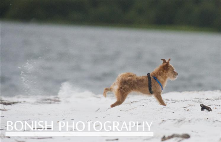 Beach_Dogs (1)