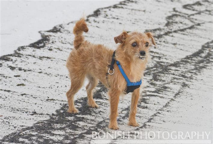 Beach_Dogs (3)