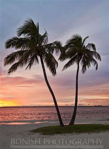 Palm Trees, Ocean, Florida