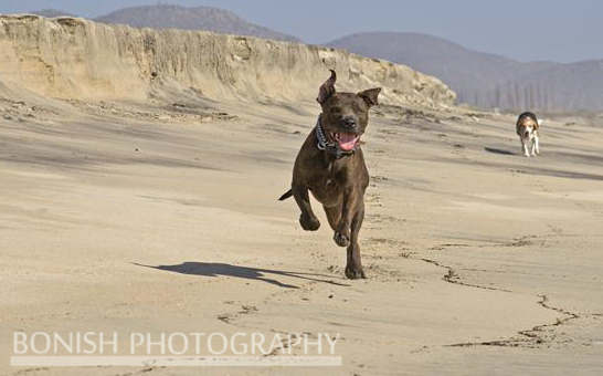Bonish Photography, Dogs running on beach