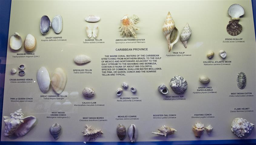 Shell Display, Bonish Photography, Travel