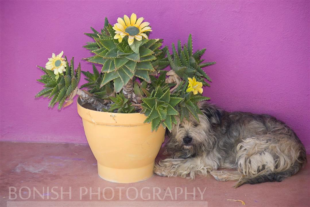 Bonish Photography, Beach Dog, Island Dog