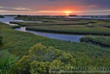Sunrise, Birth, Cedar Key, Bonish Photo