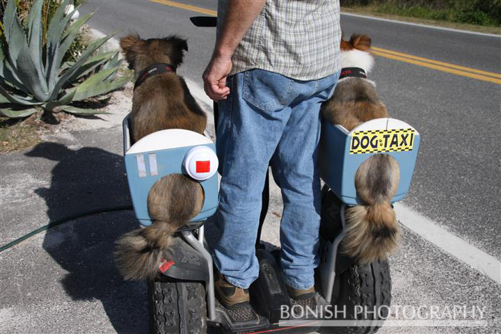Segway, Dog Taxi, Bonish Photography