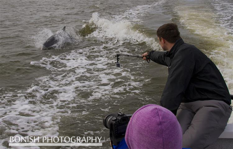 Roam Media, Dolphin, Cedar Key, Bonish Photography
