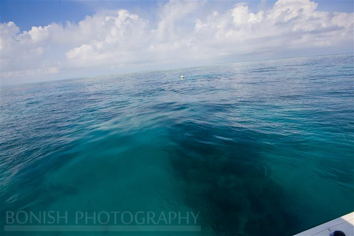 Looe Key, Florida Keys, Bonish Photography, Reef