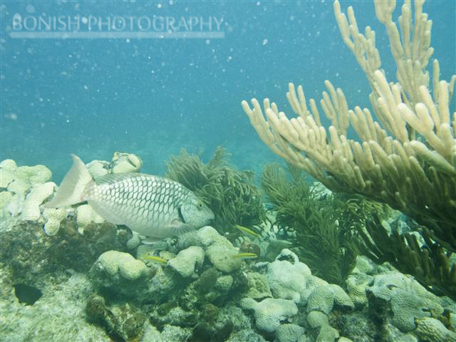 Reef, Underwater Photography, Bonish Photography