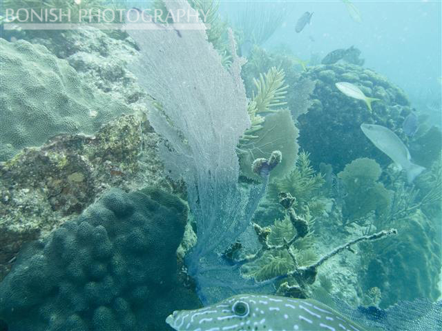 Reef, Underwater Photography, Bonish Phtoography