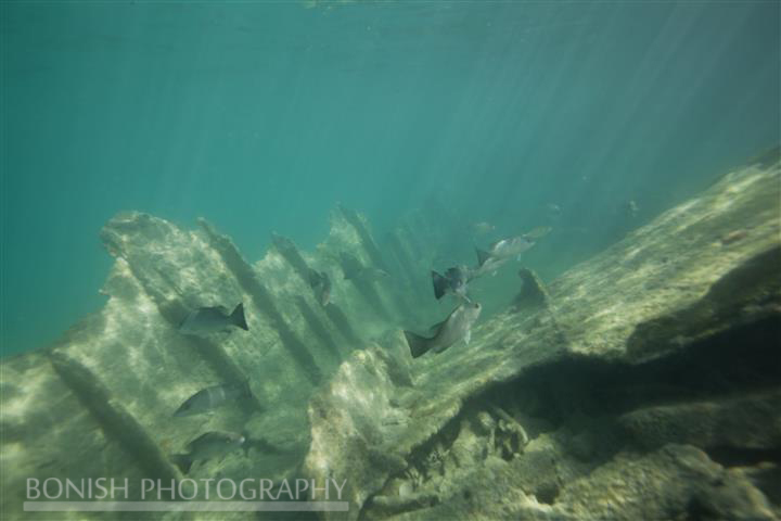 Sunken Hull, Key West, Mellow Ventures, Bonish Photography, Underwater Photography