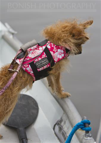 Little, Dog, Chorkie, Outward Hound, Life Jacket, Bonish Photography