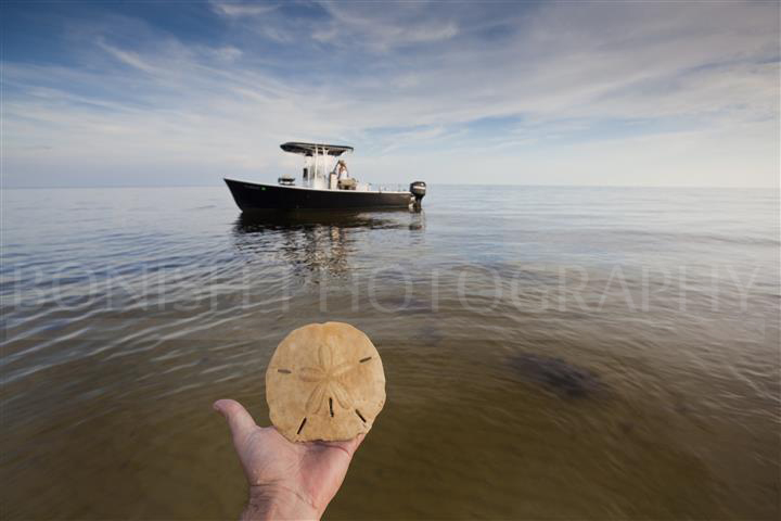 Sand Dollar, Boat, Bonish Photography, Ocean, Gulf of Mexico