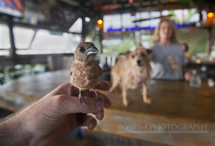 Baby Cardinal, Tiki Bar, Low-Key Hideaway, Dog on Bar