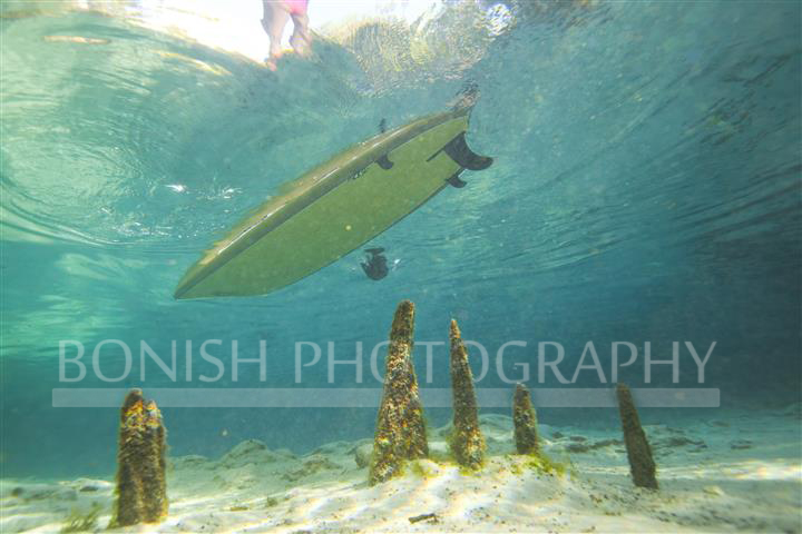 Cypress Knees, Underwater Photography, SUP, Stand Up Paddle Boarding, Bonish Photography