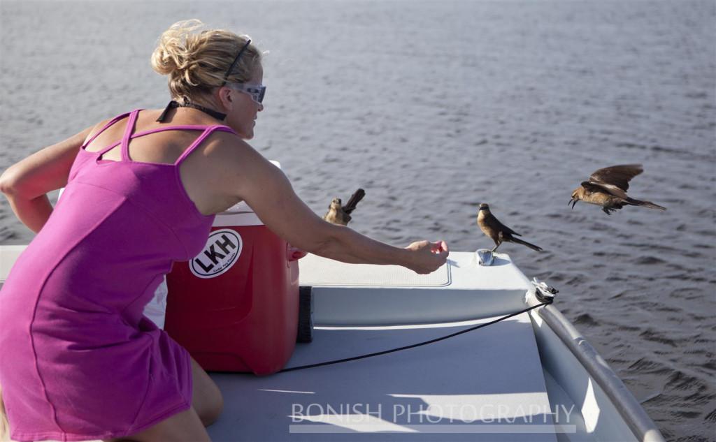 Bird Feeding, Cindy Bonish, Boating, Bonish Photography