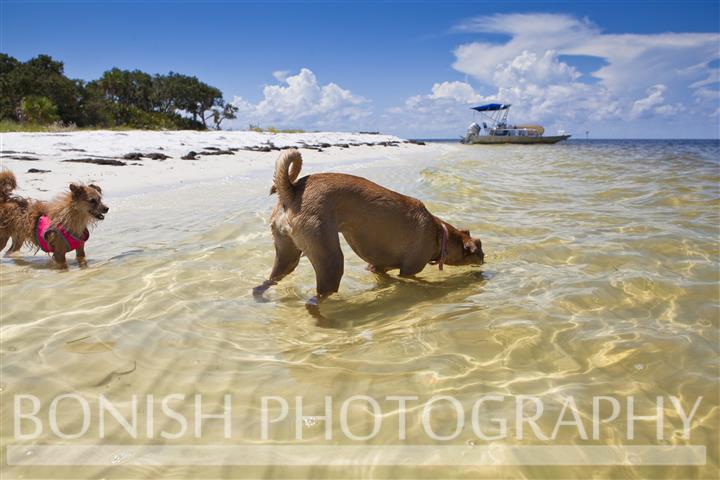 Dog, Beach, White Sand, Bonish Photography, Cedar Key