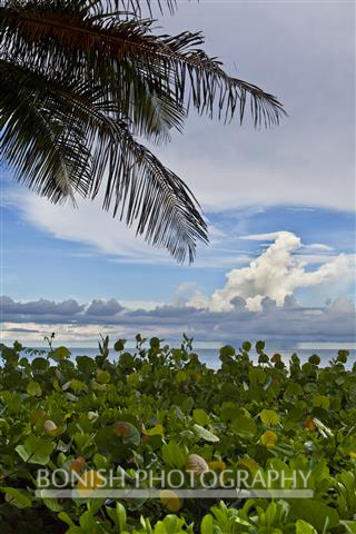 Sea Grapes, Atlantic Ocean, Singer island, Bonish Photography
