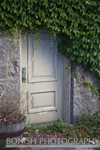Ivy, Hidden Door, Rockport, Bonish Photography