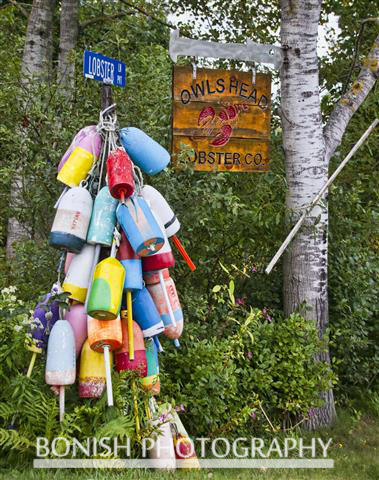 Lobster, Buoys, Maine, Bonish Photo
