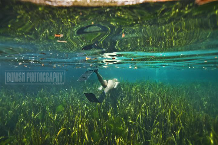 Juniper Springs, Underwater Photography, Bonish Photo, Amanda Gilbert