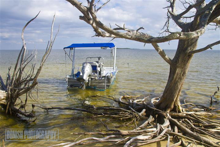 Seahorse Key, Florida Boating, Cedar Key, Bonish Photo