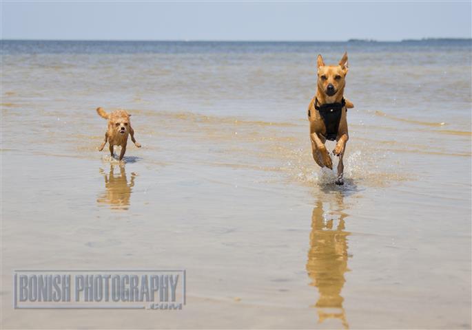 Dog, Water Dog, Rescue Dogs, Bonish Photo