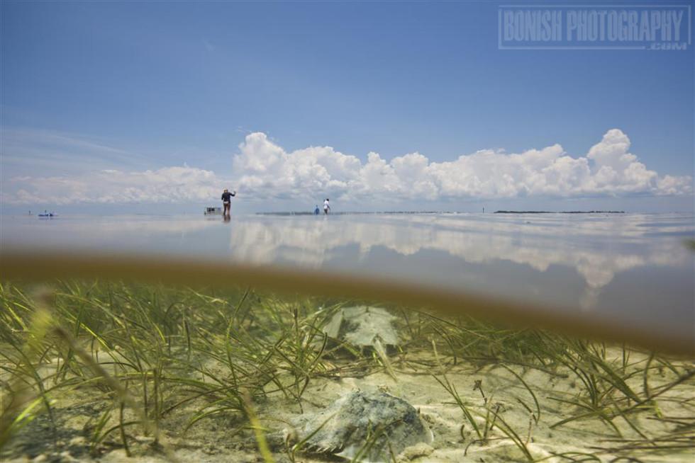 Split Shot, Underwater Photography, Bonish Photo