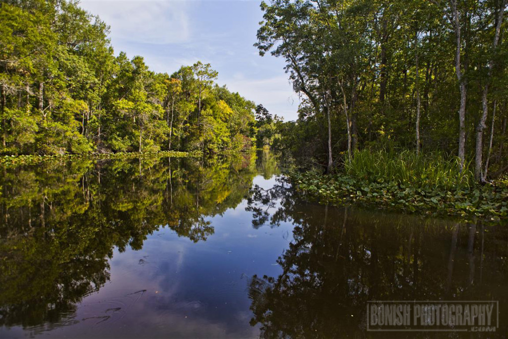 Suwannee River, Boating, Bonish Photo
