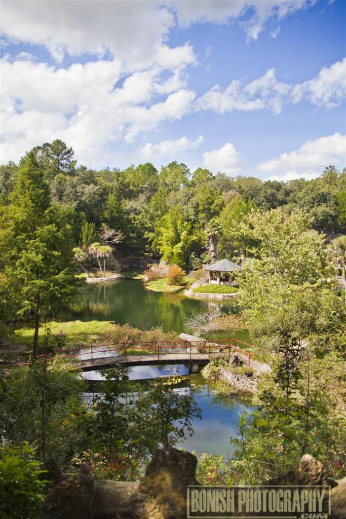 Cedar Lakes Woods & Gardens, Williston, Florida, Every Miles A Memory, Travel, Bonish Photo