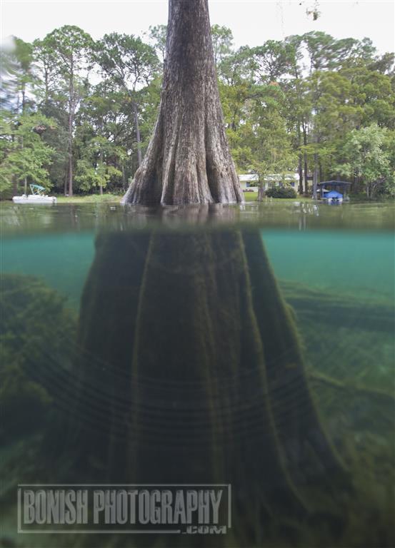 Underwater Photography, Bonish Photo, Rainbow River, Florida Springs