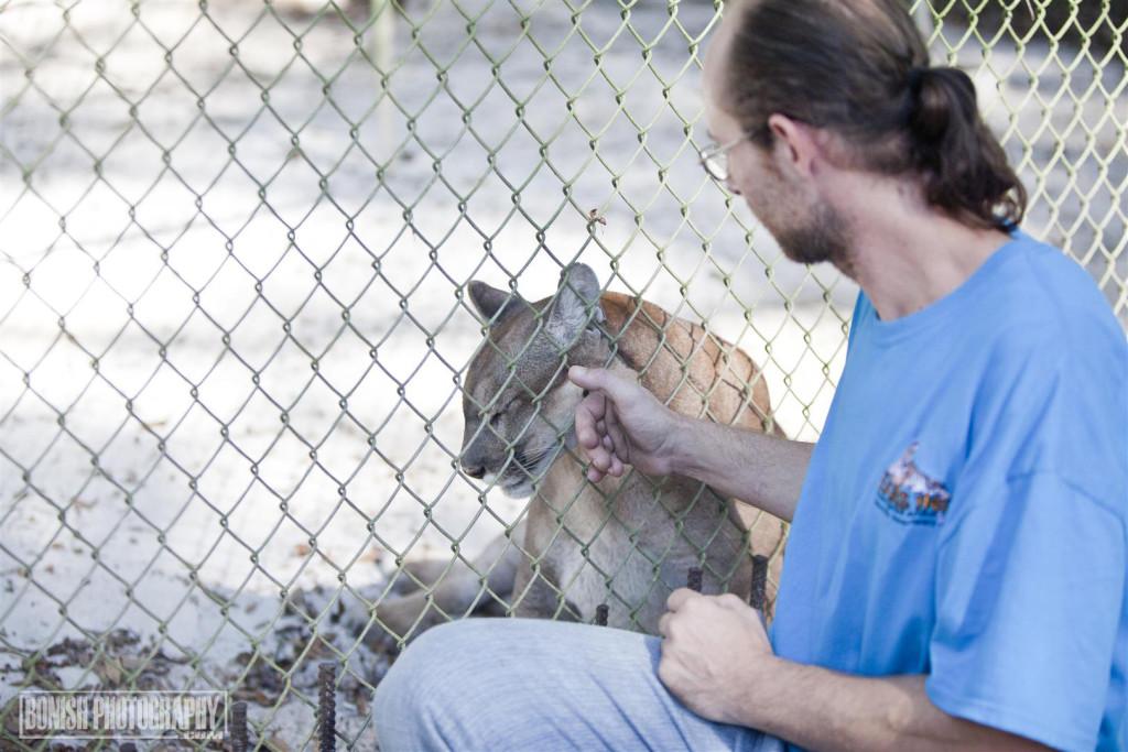 Cougar, Panther, Animal Rescue, Animal Sanctuary, E.A.R.S., Bonish Photo