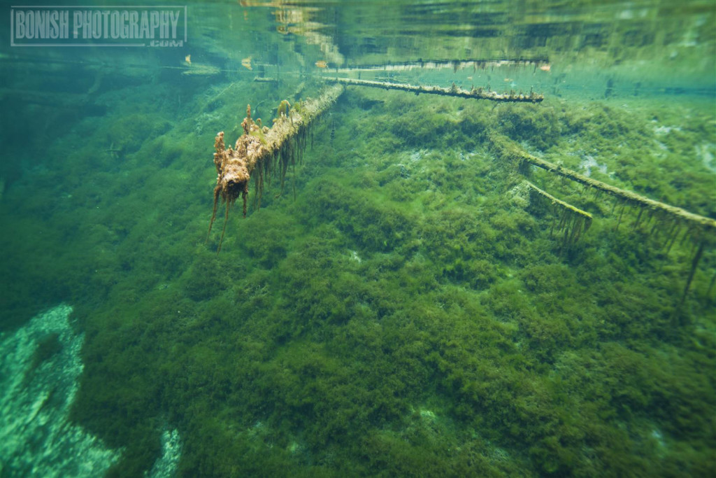 Kitch-iti-kipi Spring, Big Spring, Bonish Photo, Underwater Photography, Every Miles A Memory