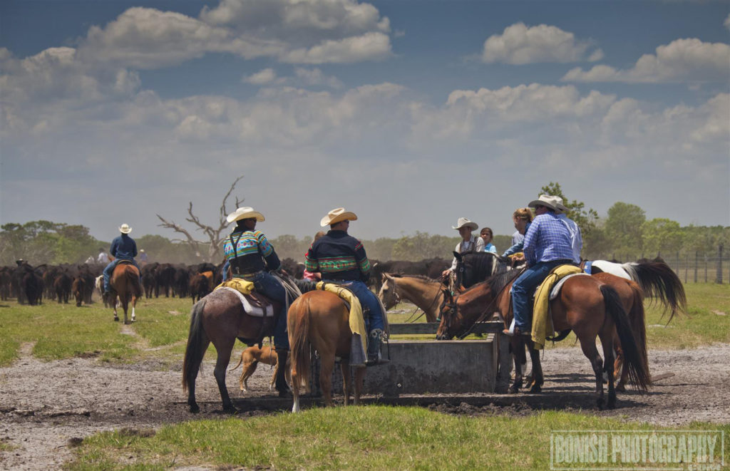 Florida Cattle Ranchers, Bonish Photo, Cowboy,