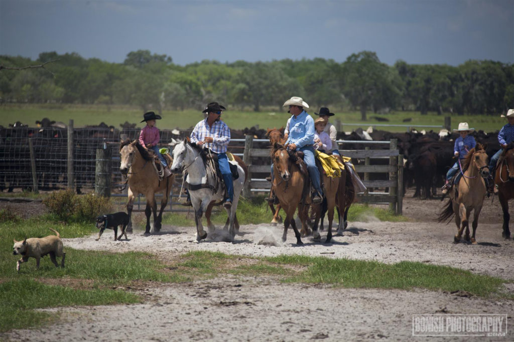 Lightsey Cattle Company, Bonish Photo, Florida Cattle Ranchers