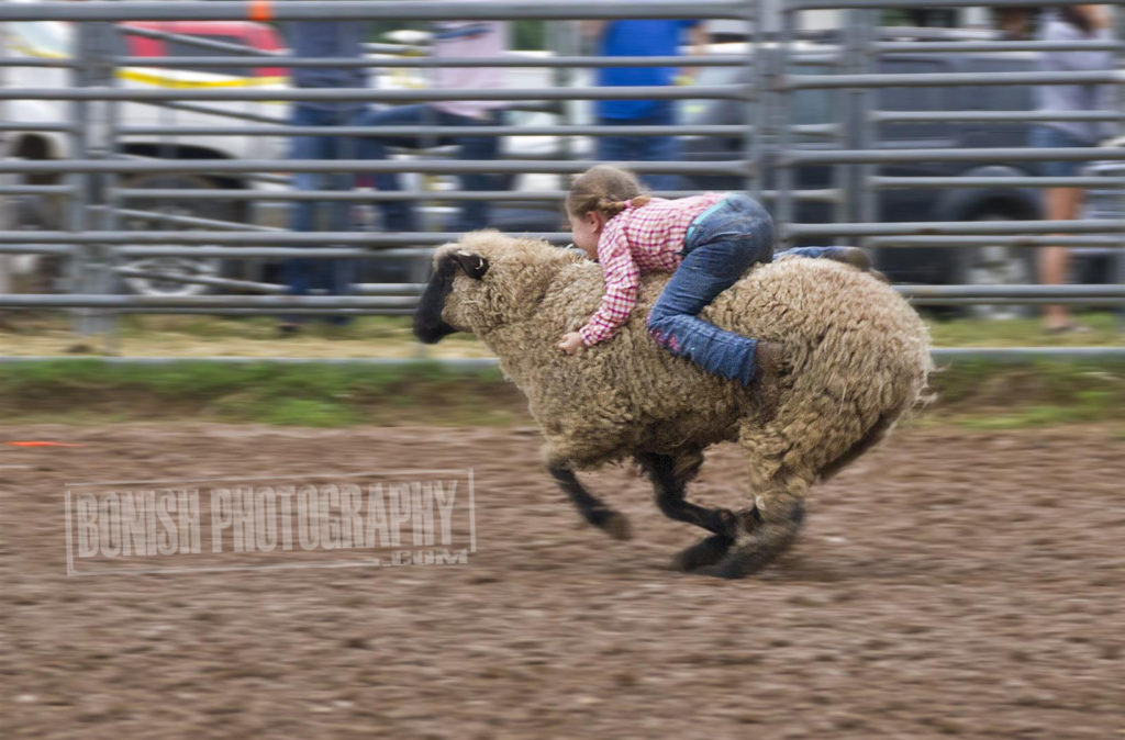 Mutton Busting, Rock Bottom, Bonish Photo